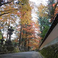 佛通寺の紅葉