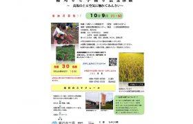 【築城450年事業】【みはらWEフェス】稲刈りと芋掘り農…