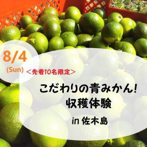 こだわりの青みかん!収穫体験in佐木島