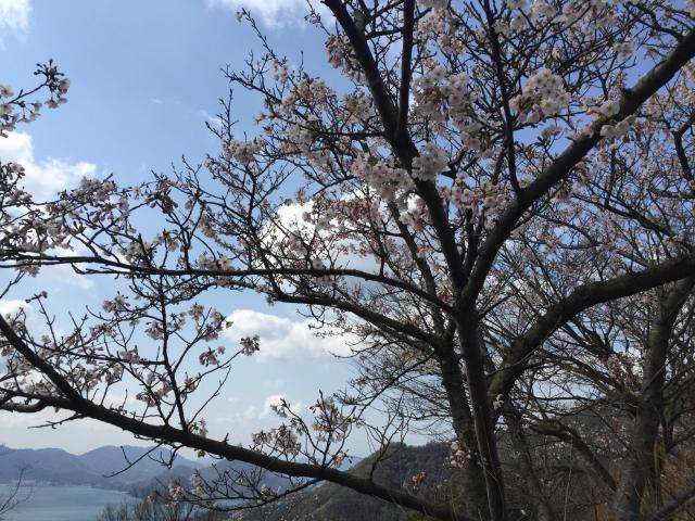 筆影山(7分咲き)4月2日撮影