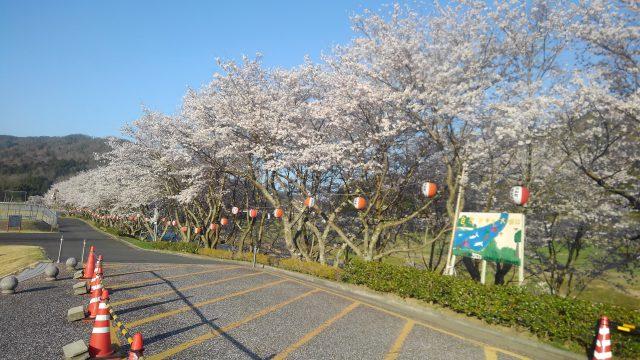 白竜湖(満開)4月6日撮影