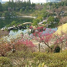 春の三景園