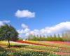 世羅高原の花畑
