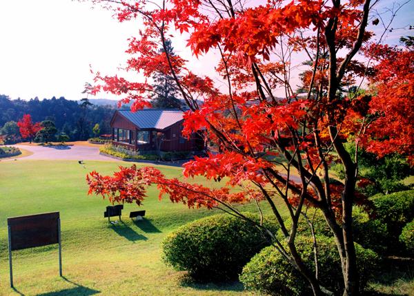 秋には色付いた木々がさまざまな紅葉を見せてくれます。ゴルフ以外の楽しみもたくさんあります。