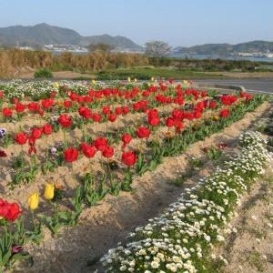 佐木島の花々